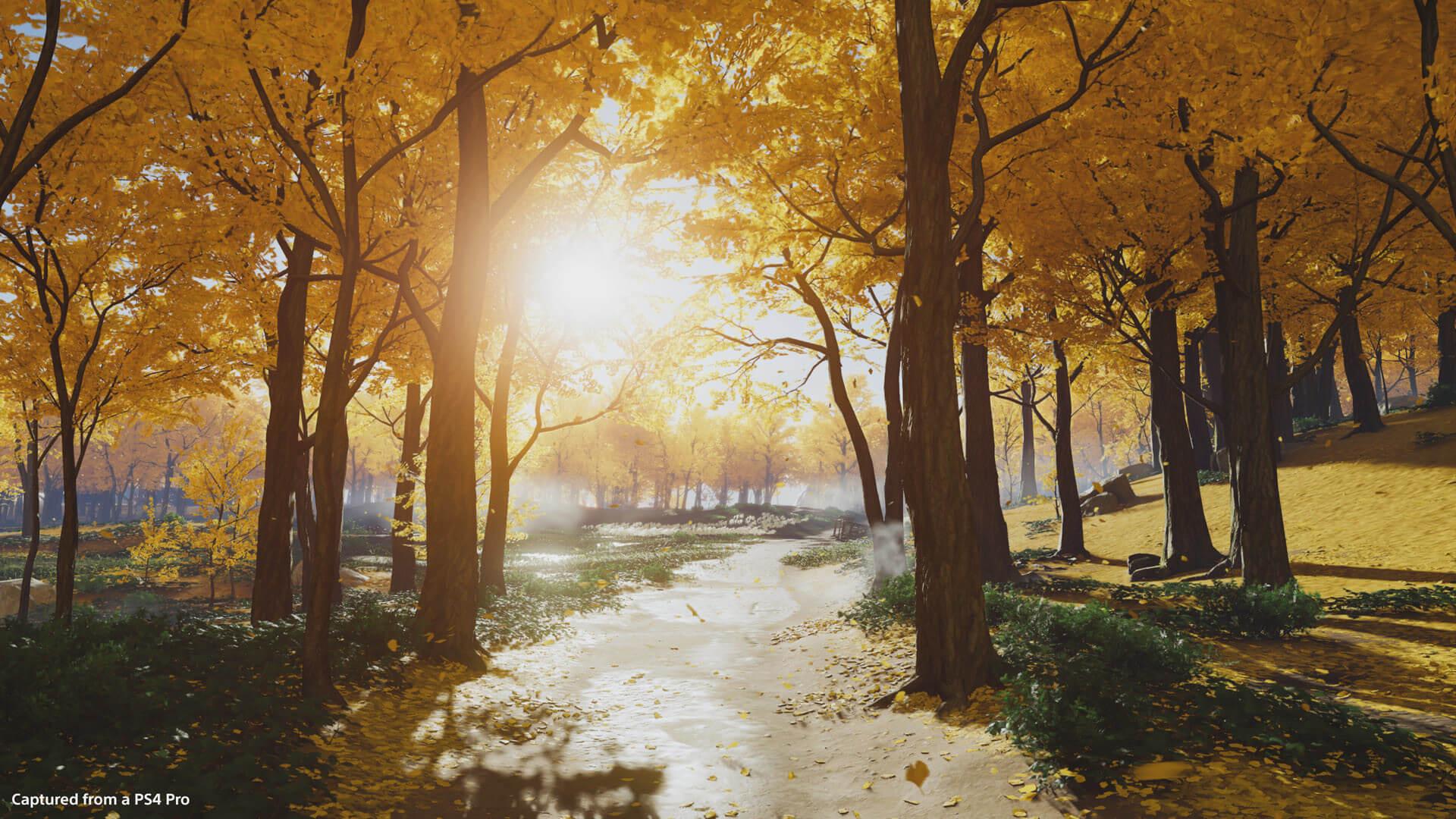 Golden Forest 1