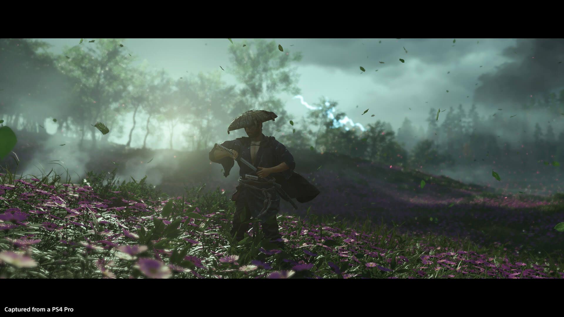 Purple Field Take2